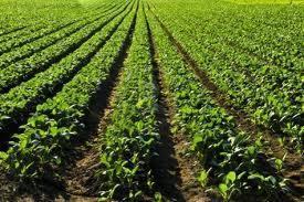 Terreno agricolo pianeggiante.