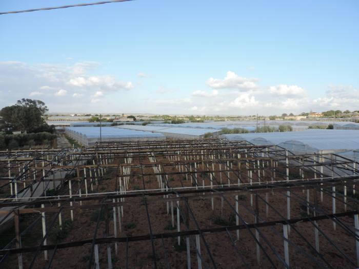 Terreno Agricolo in Vendita a Santa Croce Camerina